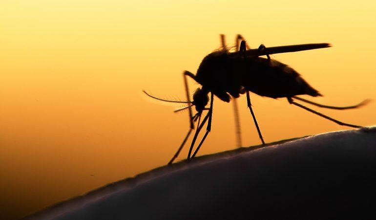 До чого сняться комарі: велика кількість комах у сні, укуси в сновидіннях, пояснення по соннику