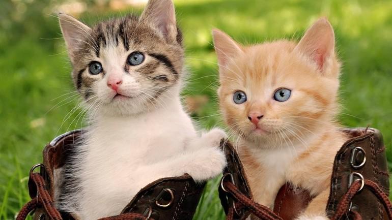 До чого сняться кошенята: тлумачення за різними сонникам, значення сну для чоловіків і жінок