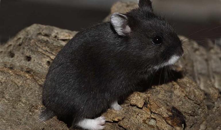 До чого сняться маленькі миші: наснилися гризуни різних кольорів, лисі, багато звірів в будинку
