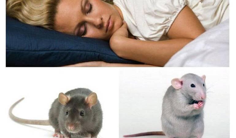 До чого сняться миші і щури чоловікам і жінкам: живі і мертві, багато чи мало, дії гризунів та сновидця