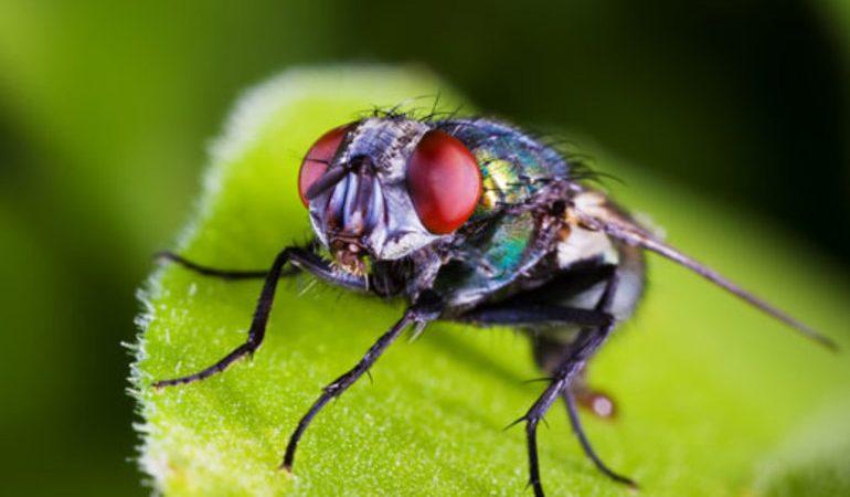 До чого сняться мухи в будинку чи кімнаті: тлумачення по сонникам, деталі сну