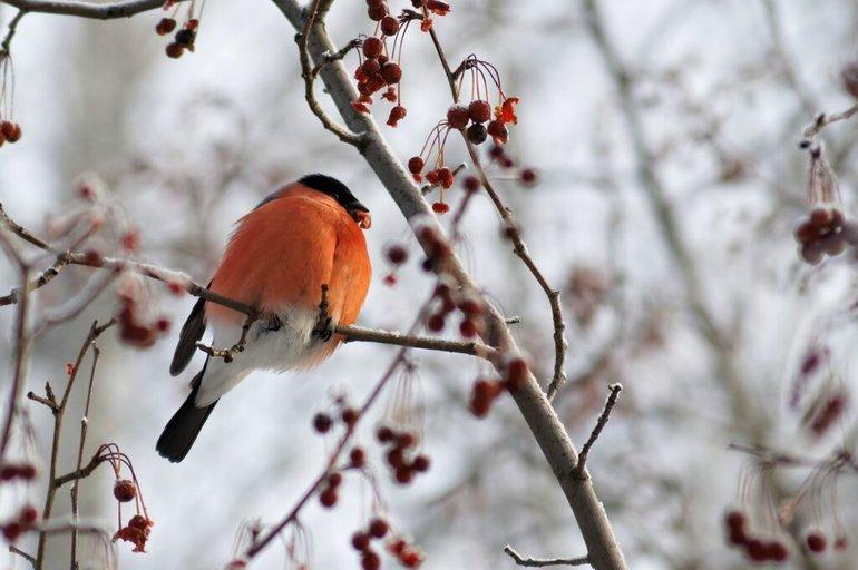 До чого сняться снігурі: на руці, на дереві і інші значення по сонникам