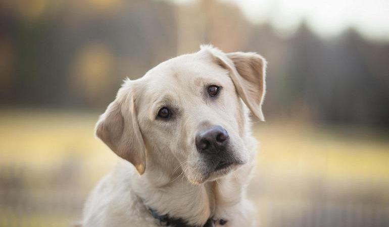 До чого сняться собаки уві сні: багато собак на вулиці, різна трактування образу великої зграї
