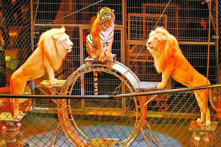 До чого сняться тварини: в будинку і зоопарку, незвичайні і екзотичні, тлумачення за різними сонникам