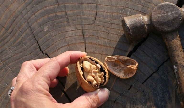 До чого сняться волоські горіхи: значення сну, в якому наснилося збирати, очищати від шкаралупи або їсти плоди