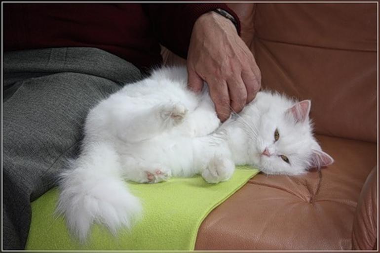 Гладити кішку у сні: тлумачення сонника Ванги, значення кольору і розміру кота, трактування для жінок