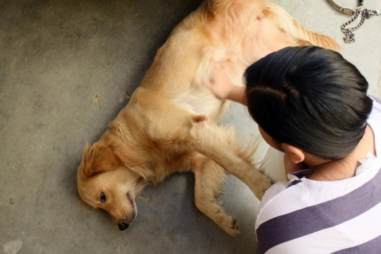 Гладити собаку у сні: значення по соннику в залежності від характеру, до чого сниться доросле тварина і щеня