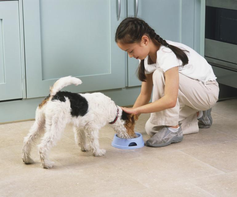 Годувати собаку у сні:частування цуценя м'ясом або хлібом,тлумачення по соннику для жінок і чоловіків