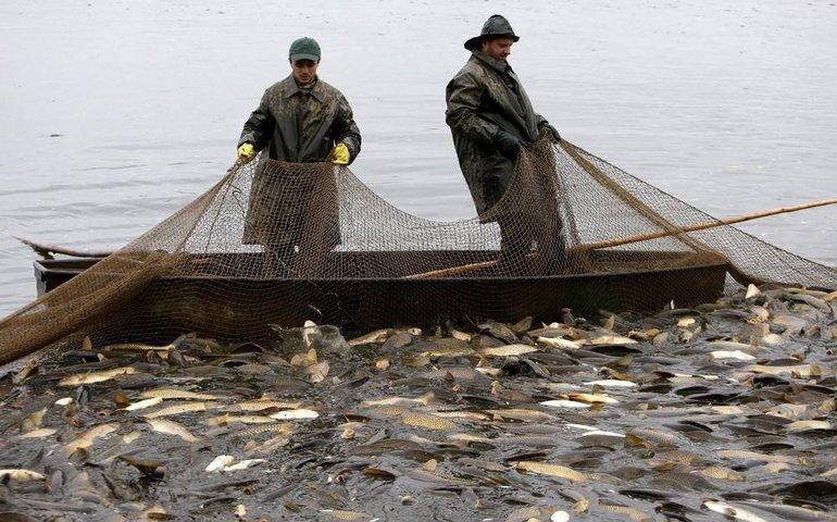 Ловити рибу мережею уві сні: до чого сниться значення для чоловіків і жінок
