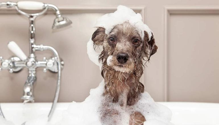 Мити собаку у сні: купати вихованця уві сні, трактування найпопулярніших сонників