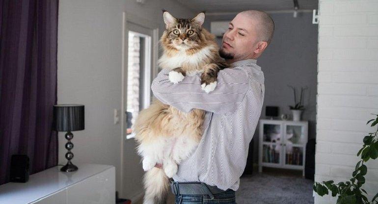 Пухнастий кіт у сні: популярні сюжети, до чого сниться великий кіт жінці по соннику Фрейда