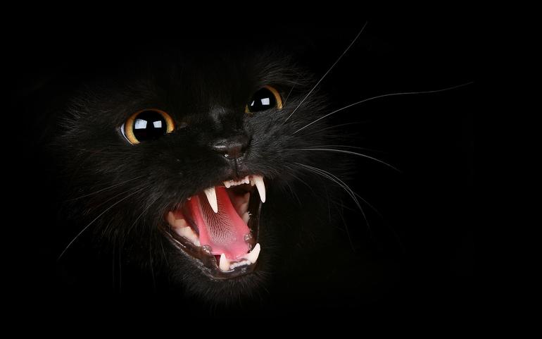 Сняться злі кішки: тлумачення снів з агресивними котами за сучасними езотеричним довідників