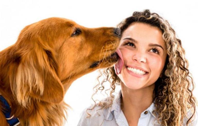 Собака лиже особа: значення по соннику сну, в якому собака облизує ніс, щоки і руки