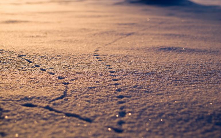 Сон про сліди: тлумачення образу і деталей у відомих сонники