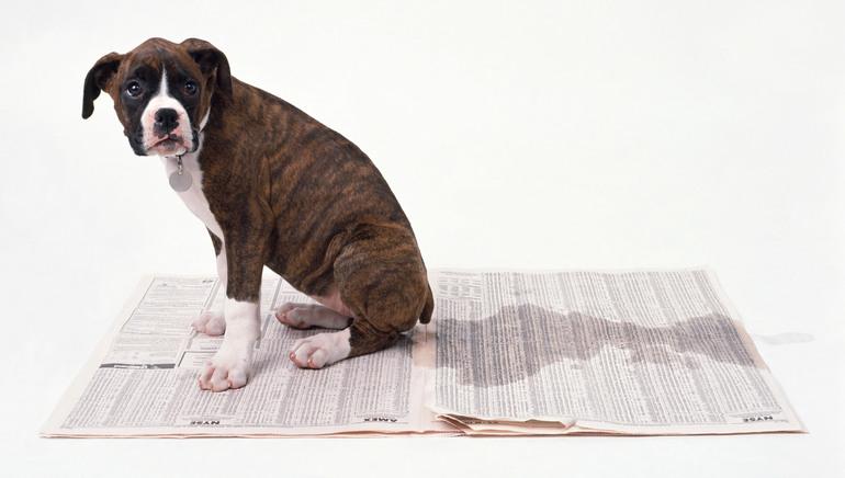 Сон про собаку, яка пісяє: порода пса, різні сюжети про тваринний в сновидінні, тлумачення сонників