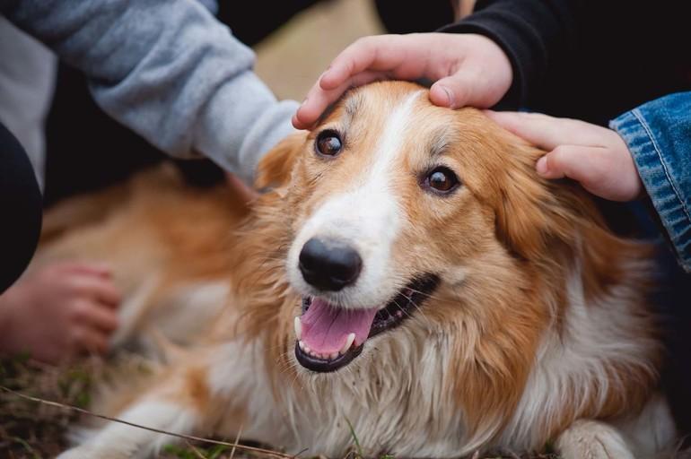 Сон про собаку, яка пеститься: до чого сниться бачити білого або чорного пса, тлумачення по сонникам