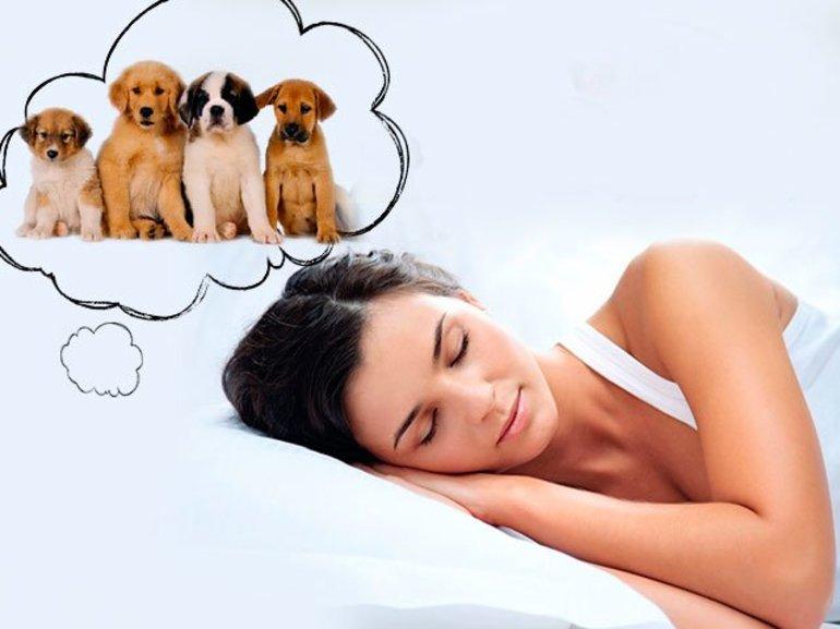 Сонник – якщо собака ощенилася: що віщують нічні марення, трактування бачення відомими провісниками