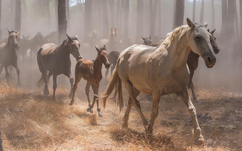 Табун біжать коней у сні: до чого сниться такий сон за різними сонникам для чоловіків і жінок