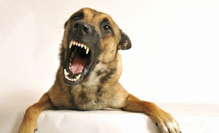 Уві сні вкусила собака за руку: значення і тлумачення сонників, забарвлення і характер тварини, день тижня