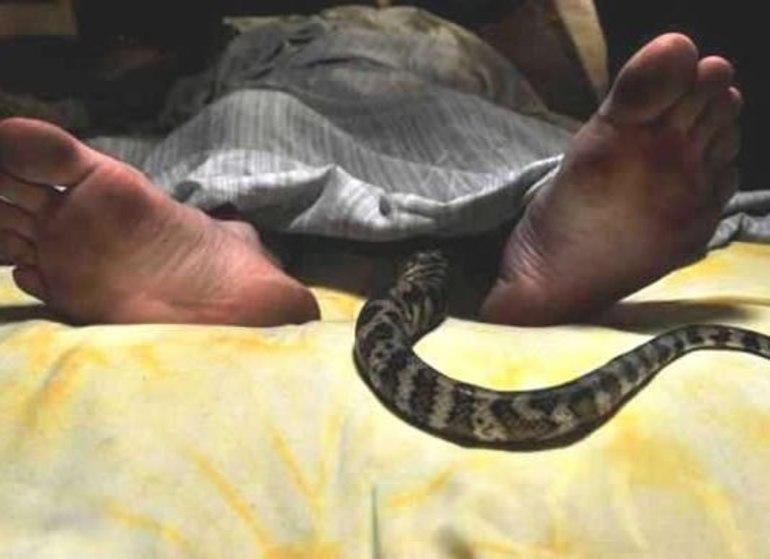 Уві сні вкусила змія: розшифровка деталей, тлумачення відомих сонників для чоловіків і жінок