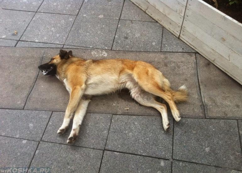 Вбити собаку у сні: зарізати ножем або задушити голими руками, значення по сонникам для чоловіків і жінок