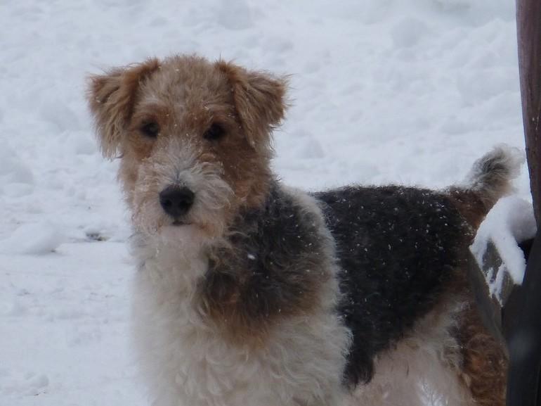 Втратити собаку по соннику: до чого сниться шукати її, що це означає для жінок, як трактування залежить від породи