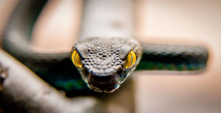 Змії нападають: трактування сну з урахуванням кольору і розміру рептилії, значення для чоловіків і заміжніх жінок, тлумачення по сонниках