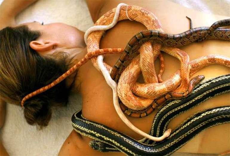 Змія в будинку по сонникам езотериків: значення великих і маленьких рептилій в нічних видіннях жінок і чоловіків