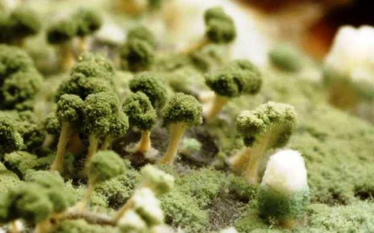 Значення, до чого сниться цвіль: трактування по сонникам, якщо бачити грибок на продуктах або стінах